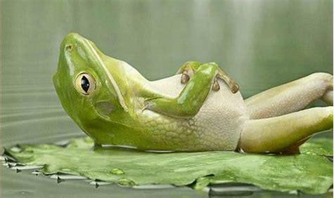 relaxte kikker